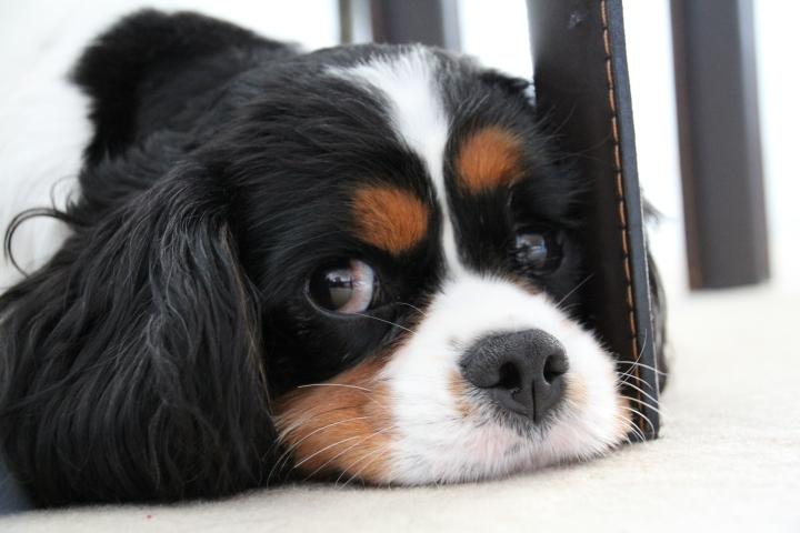 Des petites zamours de petdog